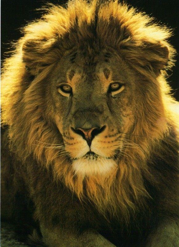 Bien connu lion KT45